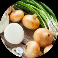 יתרונות הבצל ומתכון לפשטידת בצל ללא קמח